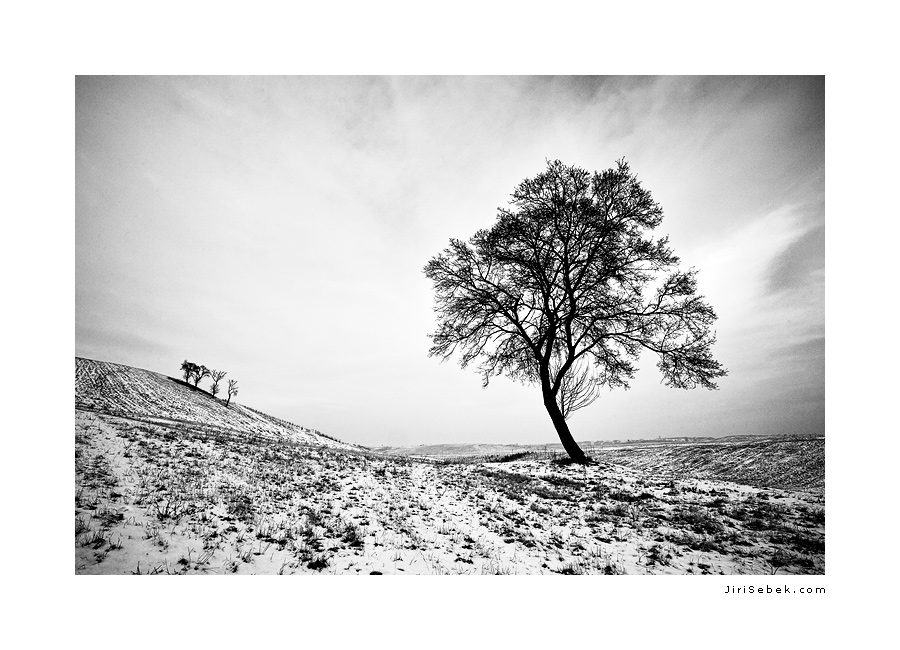 fotografie Winter field 2