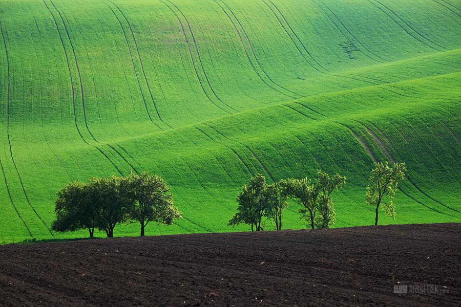 fotografie Trees 4