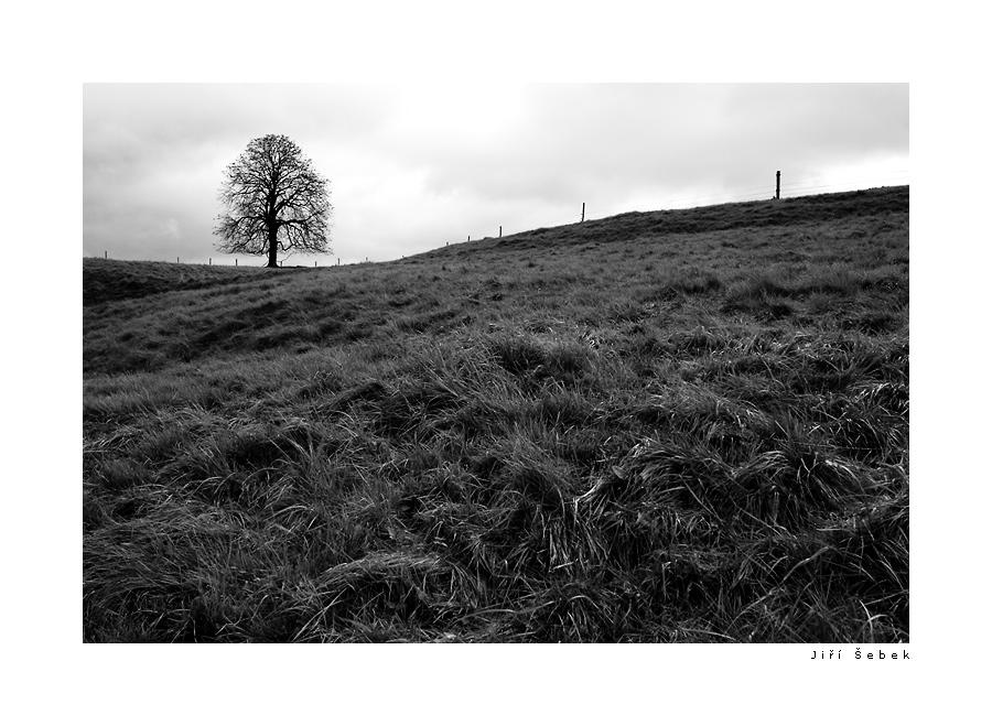 fotografie Tree 4
