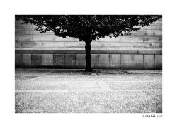 fotografie Prague Castle Tree