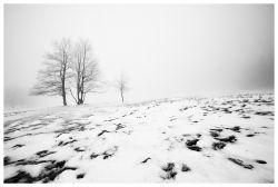 photo Meadow in Bohemian Switzerland