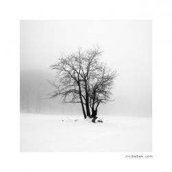 photo Solitary, Bohemian Switzerland