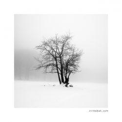 fotografie Solitary, Bohemian Switzerland