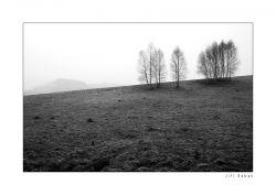 fotografie Birchs, Bohemian Switzerland