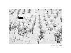 photo Trees - Prague, Petrin