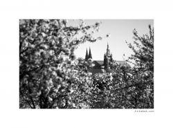 fotografie Cathedral St. Vitus