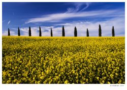 fotografie Tuscany rape