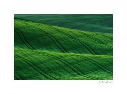 photo Field, Tuscany