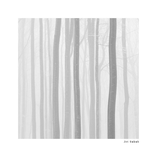 fotografie Trees