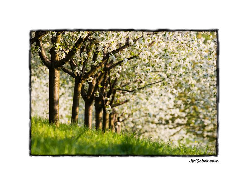 fotografie Spring orchard