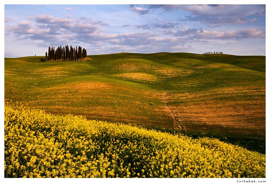 fotografie Boschetto dei Cipressi